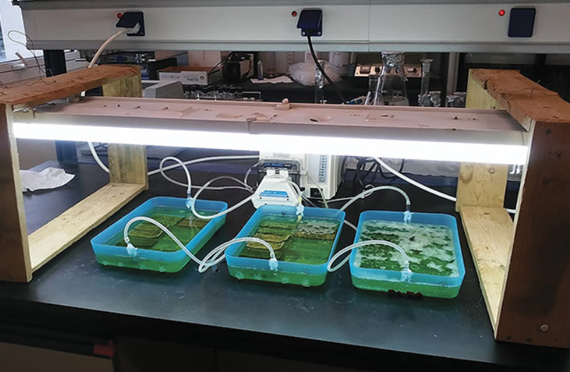 Laser-Processed Composites Help Harvest Biofuels
